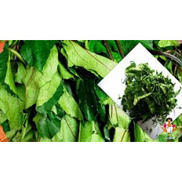 Ugwu leaves